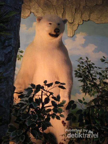 1 000 Satwa Berbagai Negara Museum Rahmat Medan Menampilkan Jenis