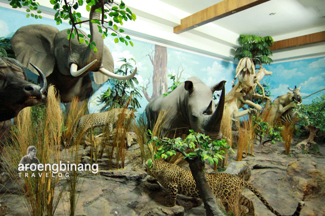 Aroengbinang Rahmat International Wildlife Museum Gallery Galeri Satwa Internasional Kota