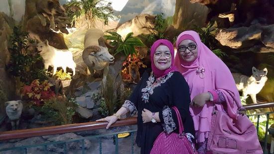Berbagai Jenis Harimau Rahmat International Wildlife Musium Museum Gallery Cantiknya