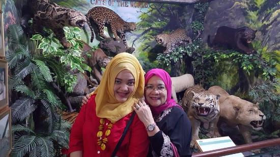 Berbagai Jenis Harimau Rahmat International Wildlife Musium Museum Gallery Galeri