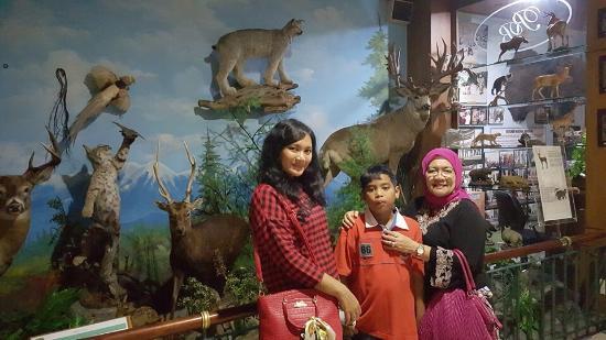 Bermacam Burung Rahmat International Wildlife Musium Gallery Museum Salah Satu