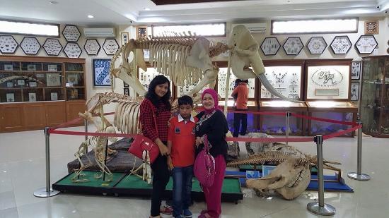 Kerangka Gajah Rahmat International Wildlife Musium Gallery Museum Galeri Satwa