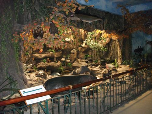 Kunjungan Rahmat Museum Galeri Persatuan Lihat Satwa Internasional Kota Medan