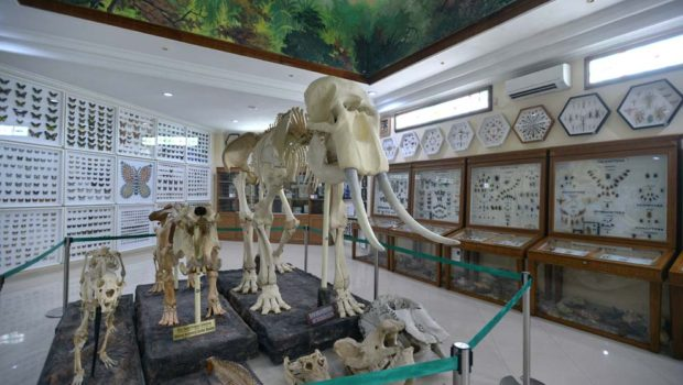 Mengenal Berbagai Binatang Liar Rahmat International Wildlife Artikel Museum Gallery
