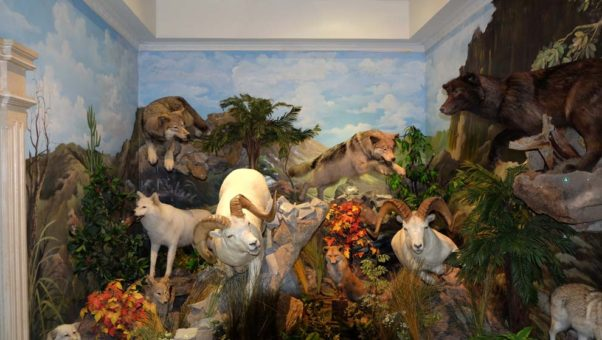Mengenal Berbagai Binatang Liar Rahmat International Wildlife Gallery 3 Museum