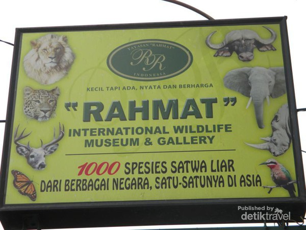 Mengenal Satwa Museum Galeri Rahmat Medan International Wildlife Gallery Internasional