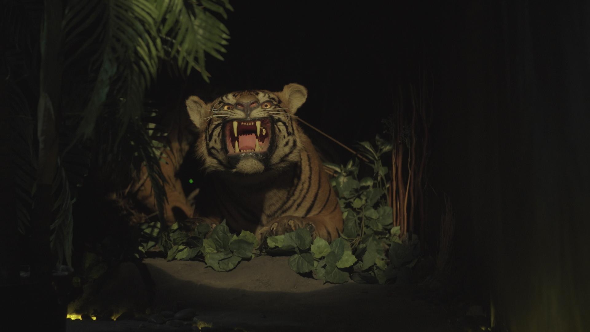 Mengunjungi Museum Pengawetan Binatang Gila Medan Vice Kita Bagian Konservasi