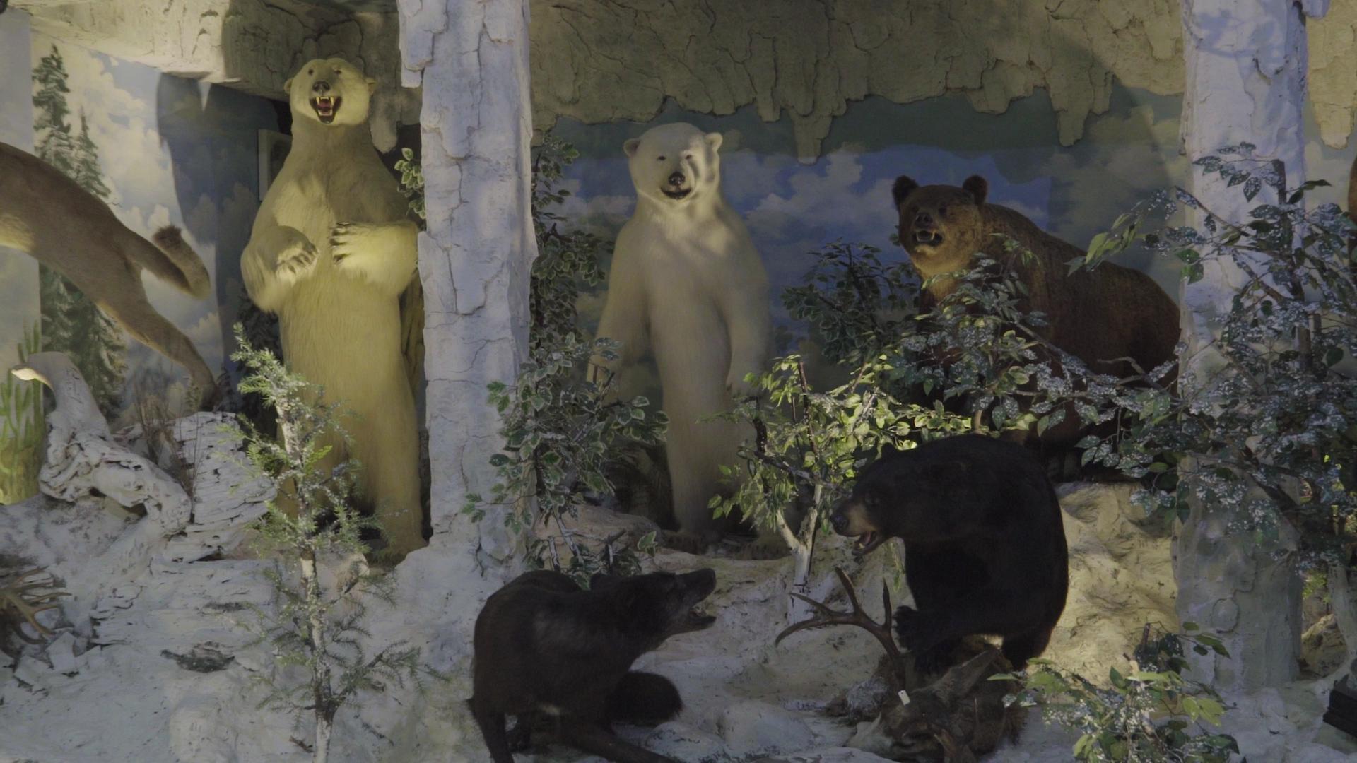 Mengunjungi Museum Pengawetan Binatang Gila Medan Vice Rahmat Shah 2