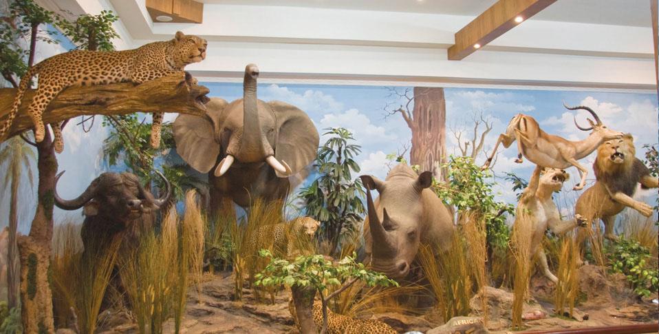 Museum Rahmat Internasional Wildlife Galery Medan Salah Satu Kawasan Menarik