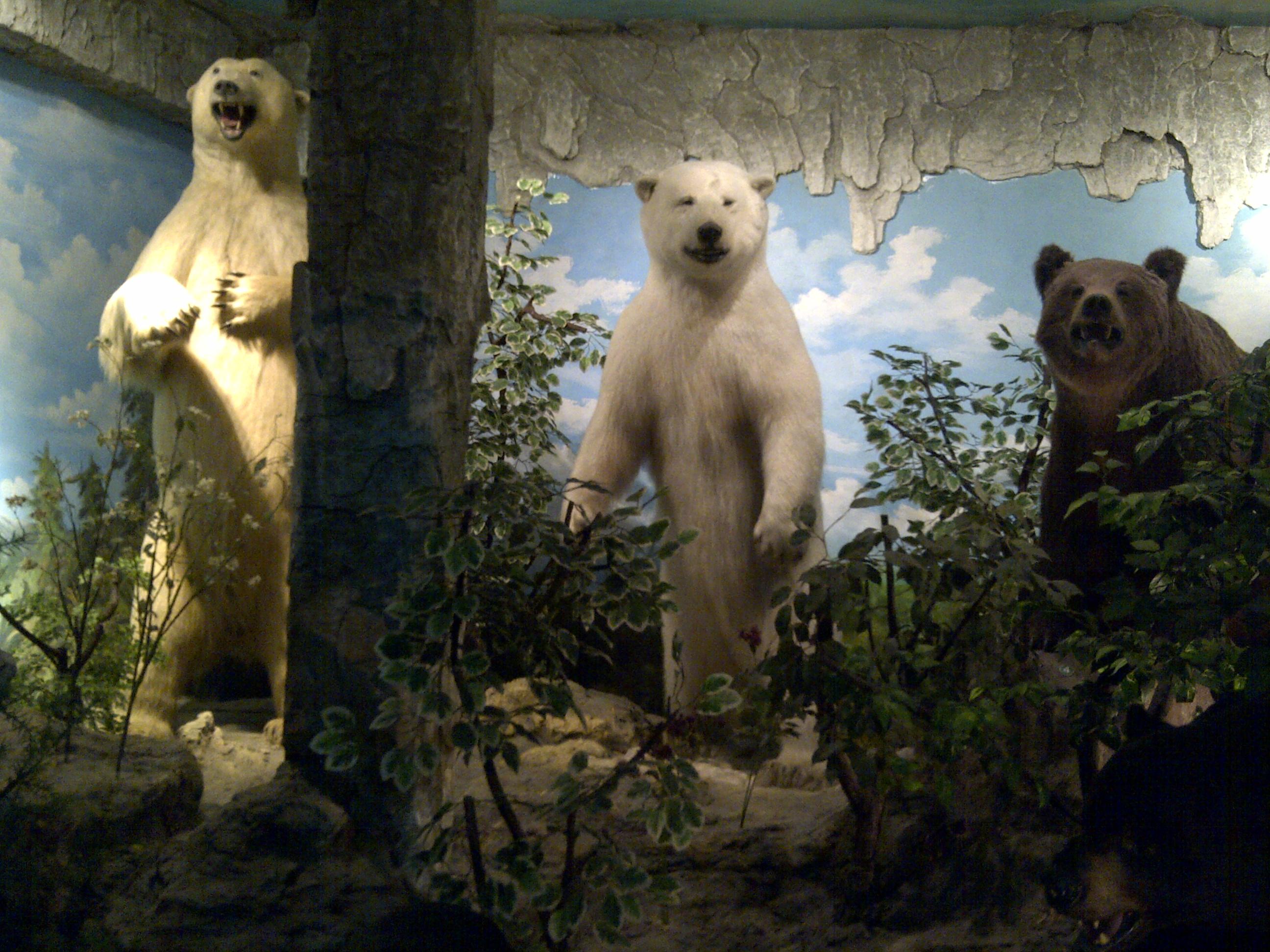 Museum Rahmat Medan Danang Evi Galeri Satwa Internasional Kota
