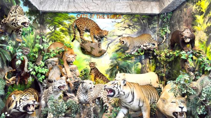 Museum Rahmat Medan Koleksi Ribuan Satwa Legal Bagi Tiket Gratis