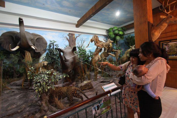 Museum Satwa Liar Medan Antara Foto Pengunjung Mengamati Hewan Diawetkan