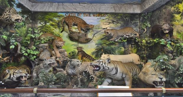 Rahmat International Wildife Gallery Kebun Binatang Mati Sportourism Medan Museum