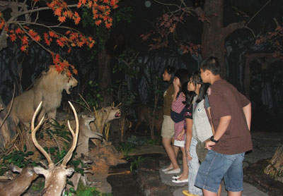 Rahmat International Wildlife Museum Gallery Denah Lokasi Galeri Satwa Internasional