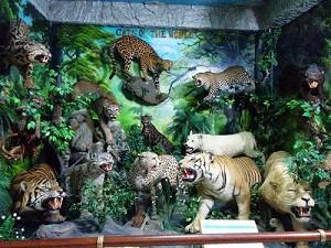 Rahmat International Wildlife Museum Gallery Galeri Satwa Internasional Kota Medan