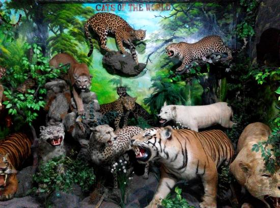 Rahmat International Wildlife Museum Gallery Medan 2018 Photos Tripadvisor Galeri