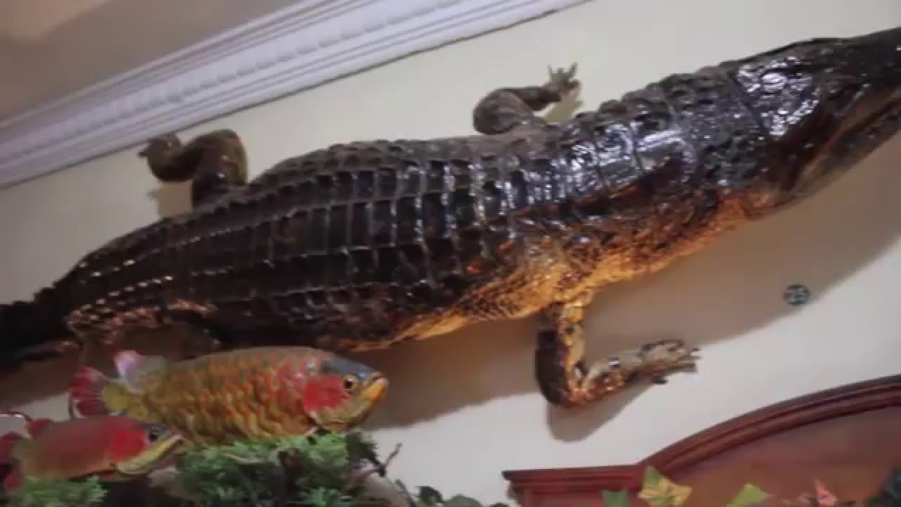 Rahmat International Wildlife Museum Gallery Medan Youtube Galeri Satwa Internasional