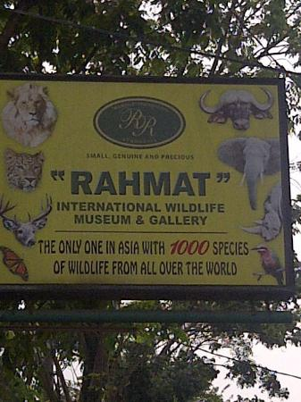 Rahmat International Wildlife Museum Gallery Picture Photo Galeri Satwa Internasional
