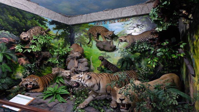 Rahmat International Wildlife Museum Gallery Sajikan Beragam Galeri Satwa Internasional