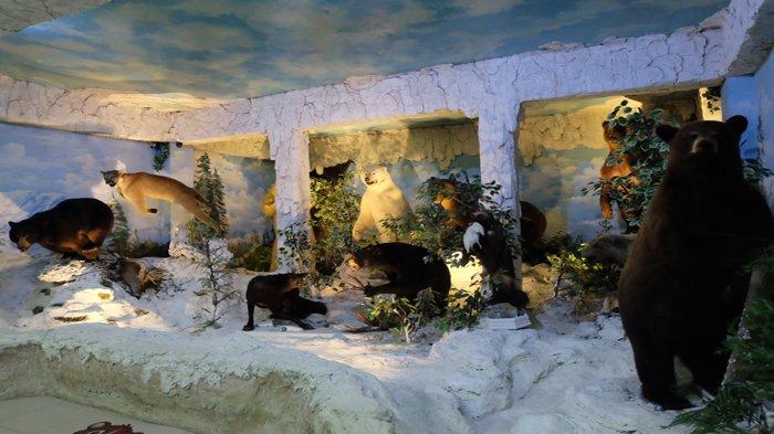 Rahmat International Wildlife Museum Gallery Sajikan Beragam Pengetahuan Tentang Satwa