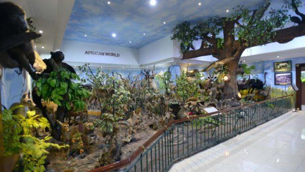 Rahmat International Wildlife Museum Gallery Tempat Wisata Kota Galeri Menerima