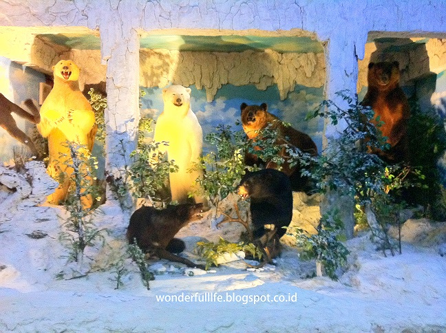 Rahmat International Wildlife Museum Gallery Travelicious Koleksi Hewan Beruang Bear
