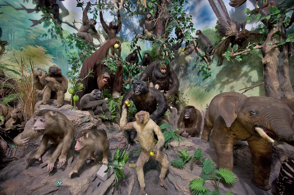 Rahmat International Wildlife Museum Gallery Wikipedia Galeri Satwa Internasional Kota