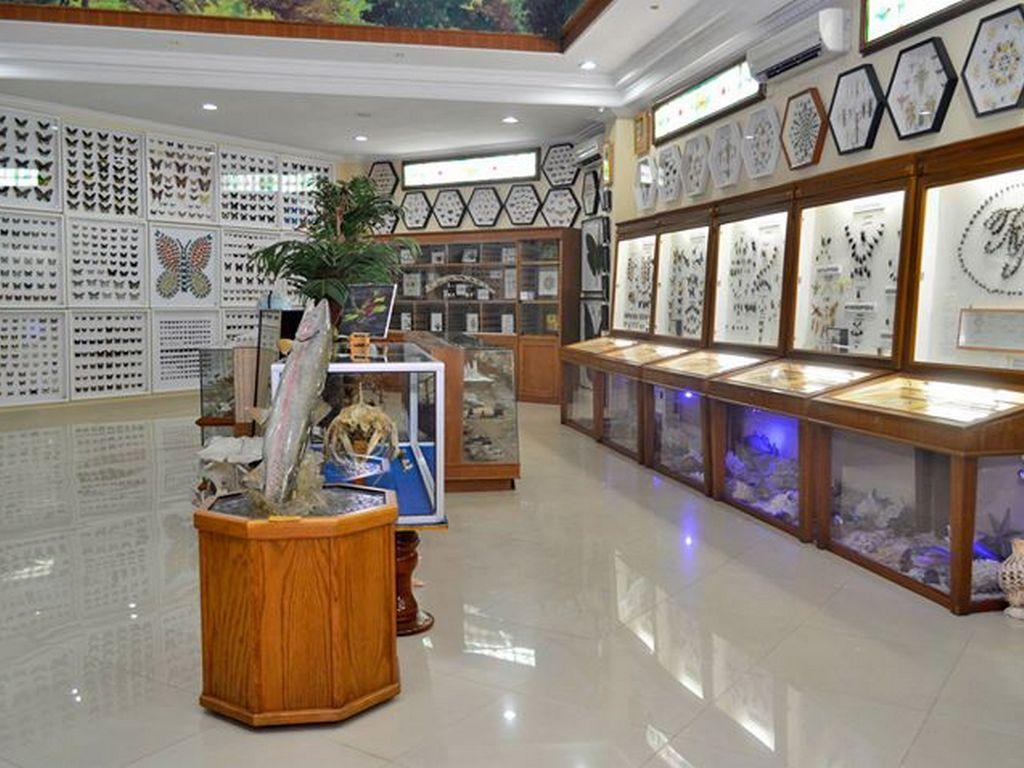 Rahmat Museum Gallery Galeri Satwa Internasional Kota Medan