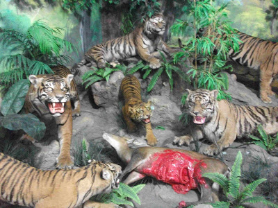 Alamat Rahmat International Wildlife Museum Gallery Harga Tiket Medan Kota