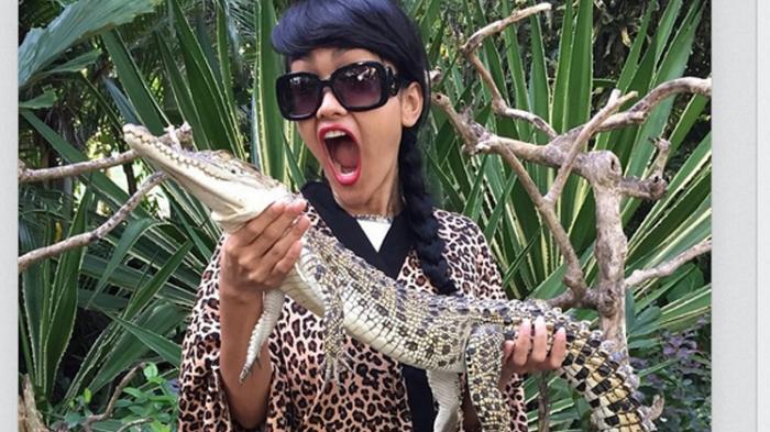 Newsvideo Buaya Terbesar Kota Medan Tribunnews Penangkaran Asam Kumbang