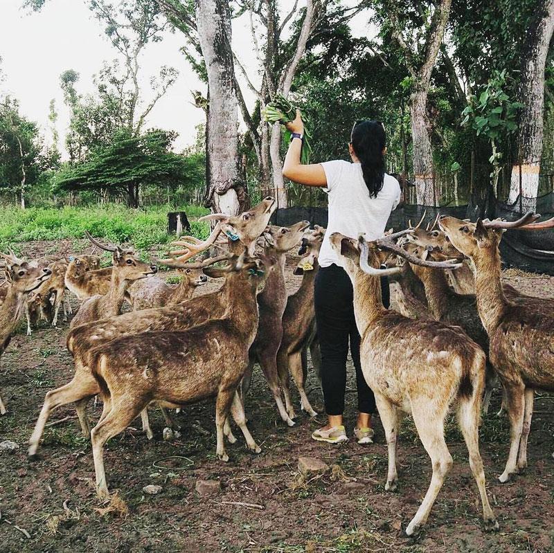 19 Tempat Wisata Keren Kediri Blitar Rusa Menjadi Salah Satu