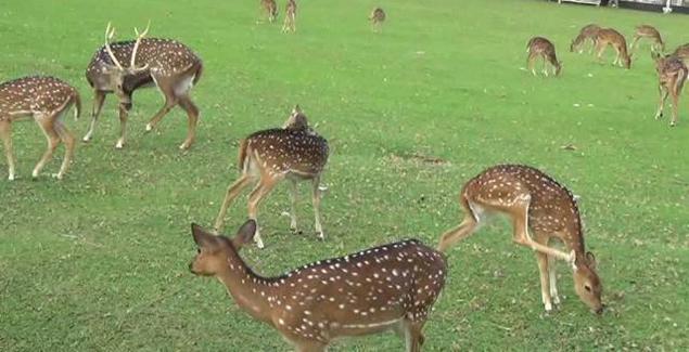 Main Kasih Makan Rusa Taman Kampus Usu Serunya Penangkaran Universitas