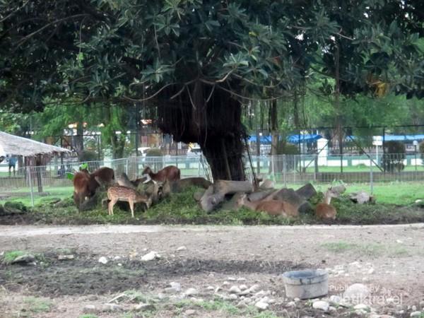 Serunya Main Kasih Makan Rusa Taman Kampus Usu Penangkaran Universitas