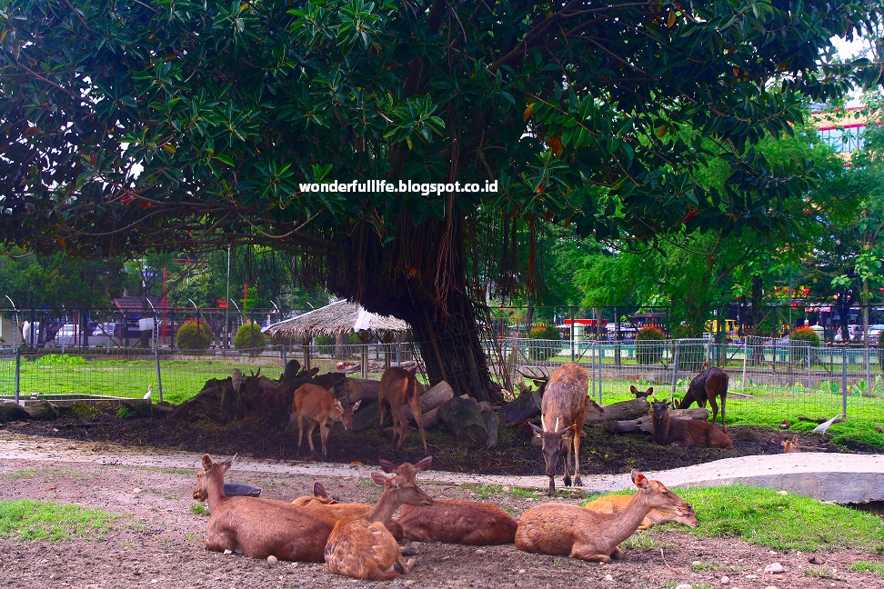 Taman Penangkaran Rusa Usu Travelicious Dijual Wortel Sayuran Makanan Ditawarkan