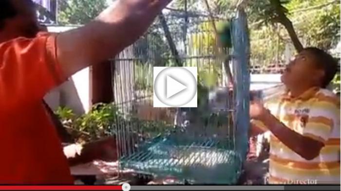 Ayo Ikuti Lomba Kicau Burung Piala Wali Kota Medan 2015