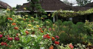 8 Taman Bunga Medan Wajib Dikunjungi Tempatwisataunik Kebun Kota