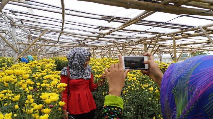 Dandan Ala Syahrini Yuk Foto Kebun Bunga Bandungan Dibuka Langsung