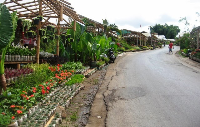 Indahnya Taman Bunga Cihideung Bandung Yoshiewafa Kebun Kota Medan