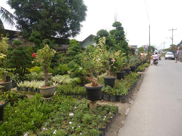 Kampung Wisata Bunga Tanjung Morawa Medan Oleh Mariam Umm Taman
