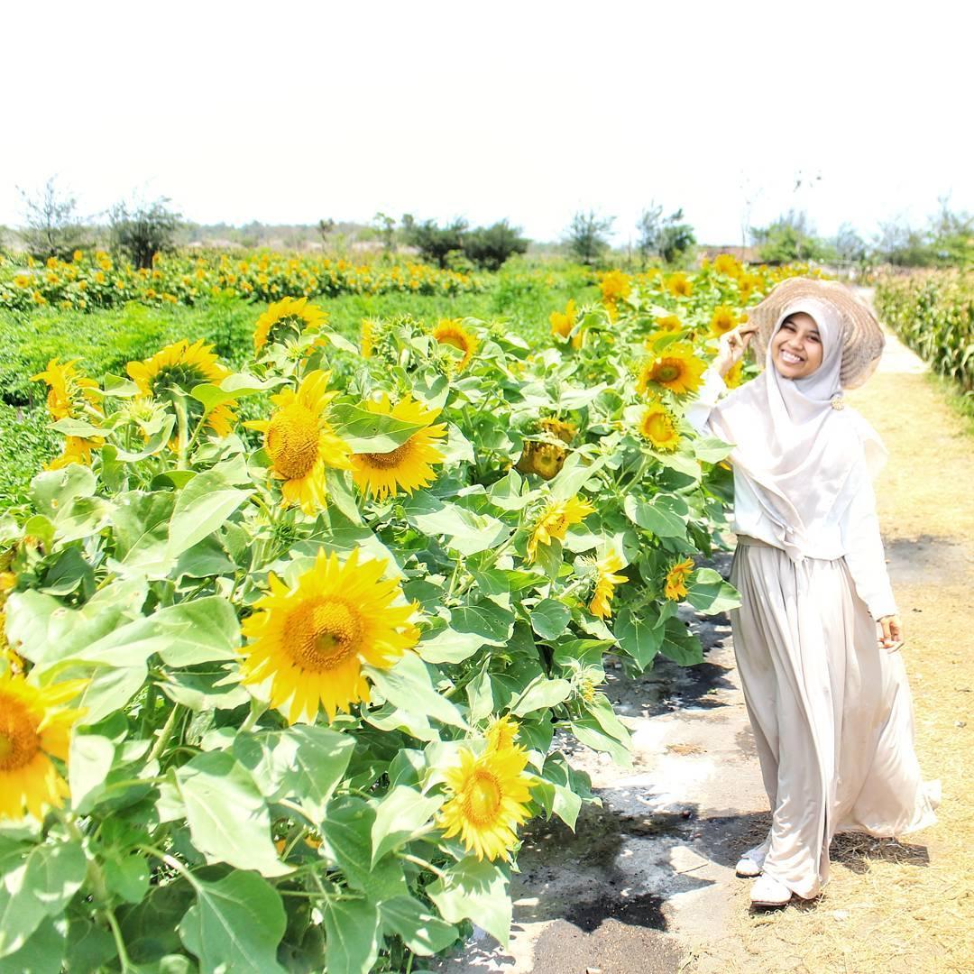 Kebun Bunga Matahari Bantul Tempat Asik Taman Kota Medan