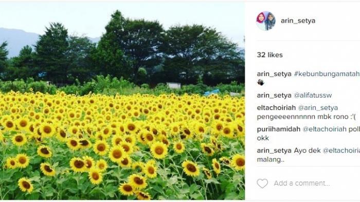 Kebun Bunga Matahari Kediri Kamu Bisa Selfie Cantik Taman Kota