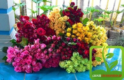 Kebun Bunga Mawar Bandung Lembang Grosir Tanaman Hias Jual Potong