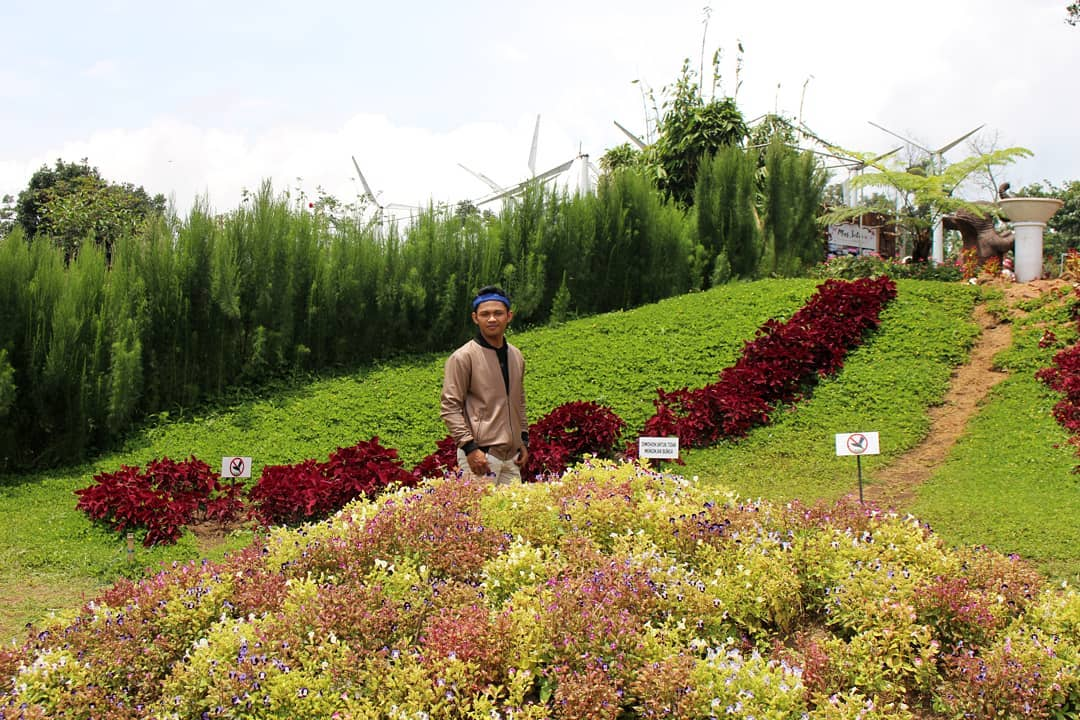 Rute Lokasi Taman Bunga Celosia Gedong Songo Bandungan Semarang Rerumputan
