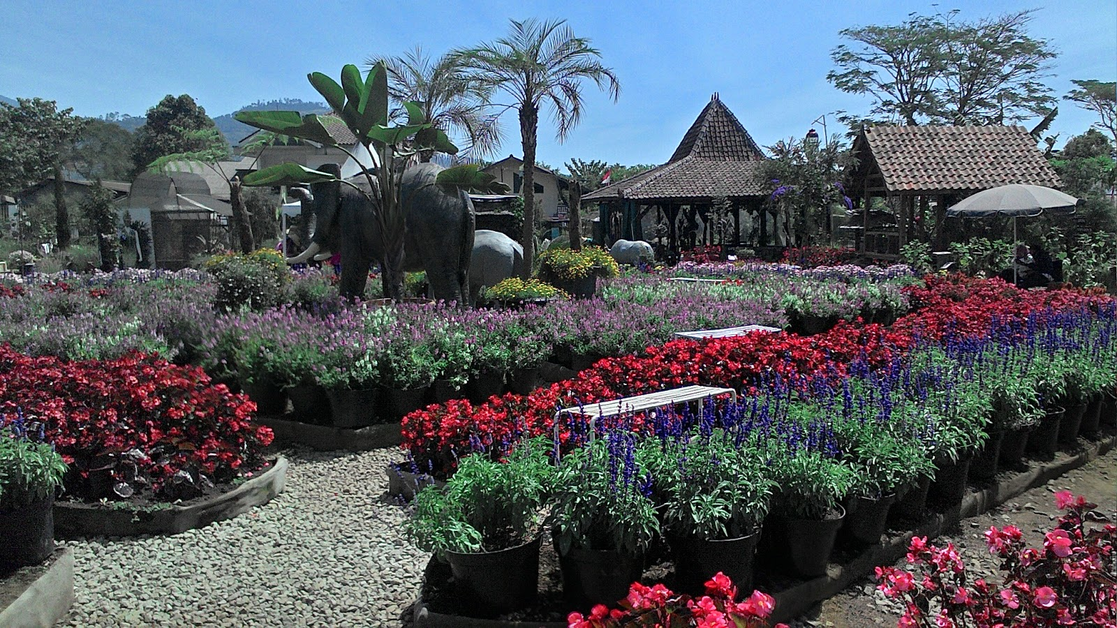Taman Bunga Begonia Kawasan Wisata Favorit Lembang Jawa Barat Kebun