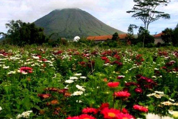 Taman Bunga Terindah Indonesia 10 Kebun Kota Medan