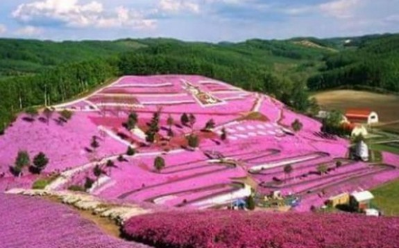 Wow Cantiknya Objek Wisata Lembah Seribu Bunga Ikon Karo Taman