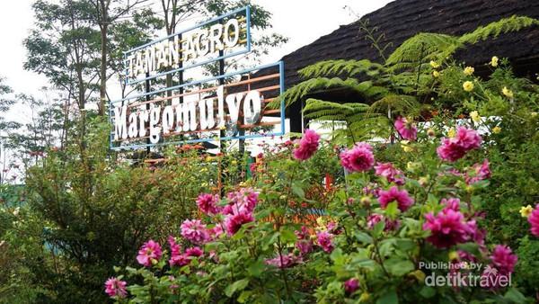 Wow Kediri Punya Kebun Bunga Secantik Taman Agro Berada Lereng