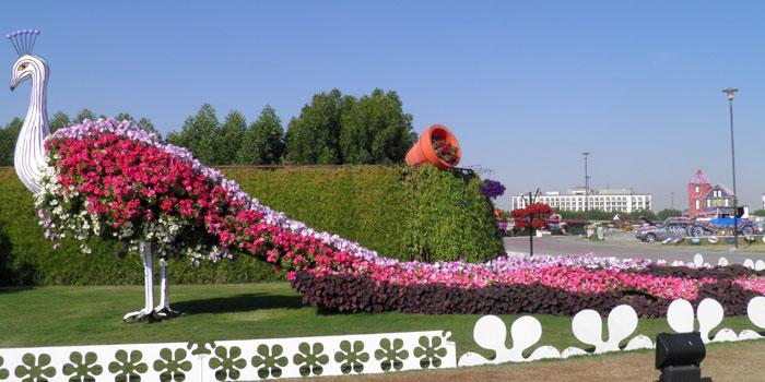 Kantor Camat Medan Amplas Disulap Menjadi Taman Bunga Sumutsatu Merak
