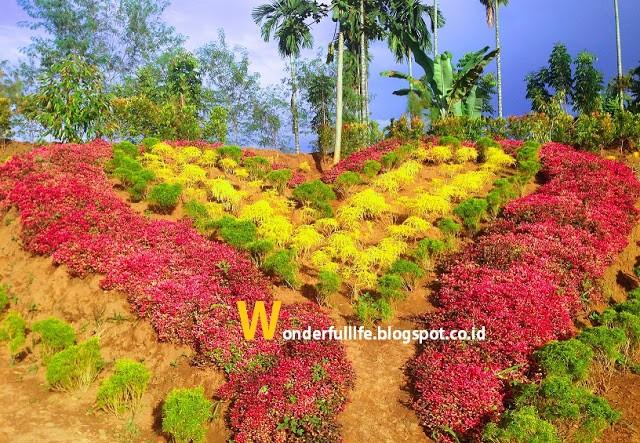 Lehu Garden Xplora Id Taman Le Hu Kota Medan