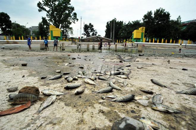 Pembersihan Kolam Sri Deli Waspada Online Sejumlah Ikan Mati Kekurangan